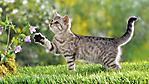gatto tigrato nel prato fiorito sfondo 1920x1080