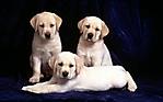 Dolci cagnolini piccoli 1920x1200