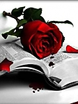 Libro con rosa sfondo wallpaper 240x320