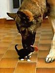 Cane affettuoso con gatto sfondo wallpaper 240x320