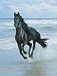 Cavallo nero che galoppa sfondo wallpaper 240x320