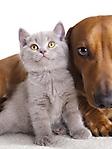 Gatto e cane sfondo wallpaper 240x320