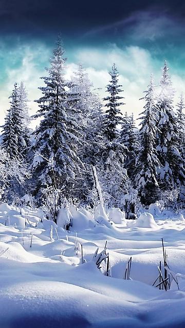 Paesaggio invernale wallpaper disegni da colorare for Disegni paesaggio invernale