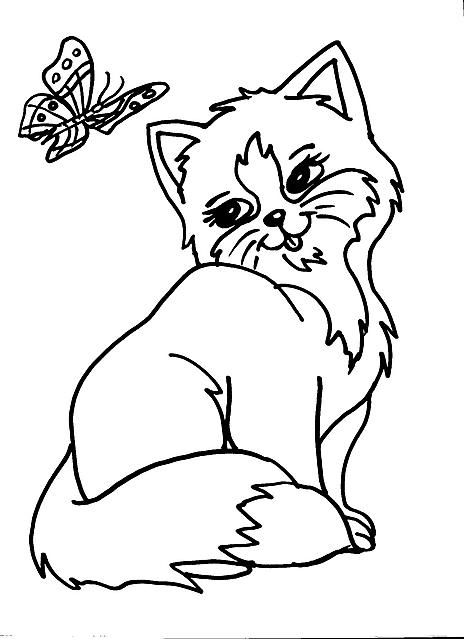 Gattina che guarda una farfalla disegno da colorare