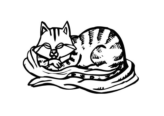 Gattino Dorme Nella Coperta Disegno Da Colorare Disegni Da