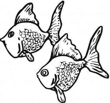 Due pesci rossi realistici da colorare disegni da colorare for Pesci da stampare e colorare
