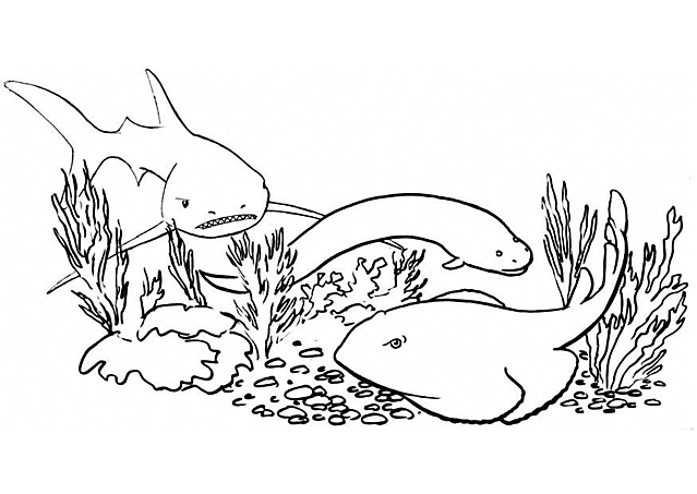 Il fondale marino da colorare disegni da colorare for Immagini squali da stampare