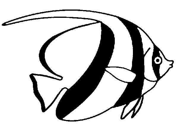 Pesce angelo zebrato grande da colorare disegni da for Pesci da stampare e colorare