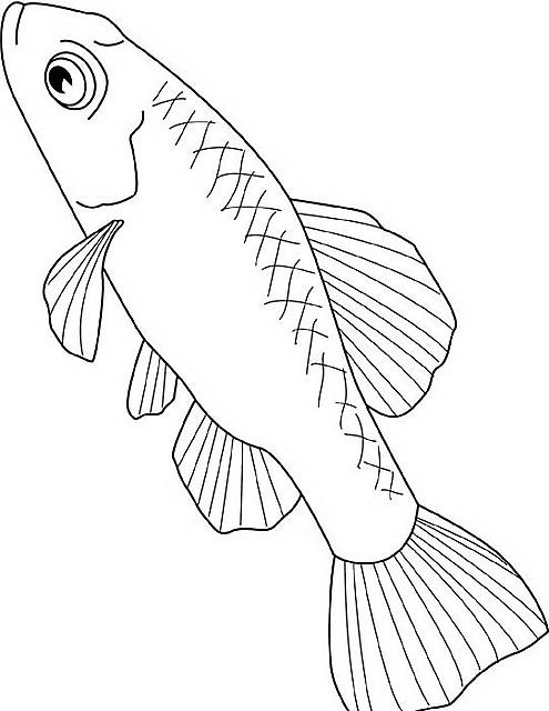 Pesce di lago da colorare disegni da colorare categoria for Trota da colorare