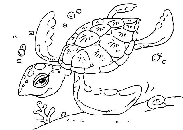 Tartaruga Marina Da Colorare Pastoorvanarskijkduin