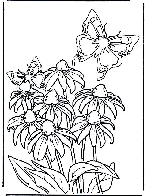 Fiori E Farfalle Disegni Da Colorare Disegni Da Colorare