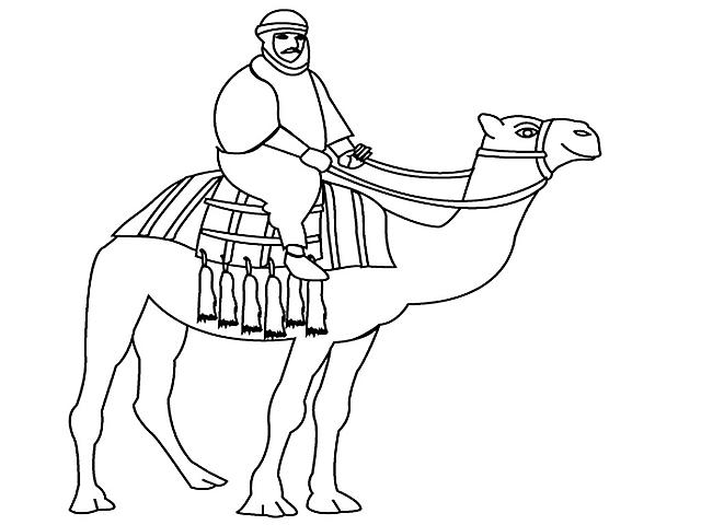 Uomo A Cavallo Di Un Cammello Disegno Da Stampare E Da Colorare