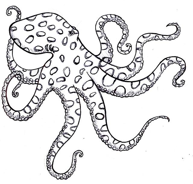 polpo maculato disegno da colorare per bambini disegni da