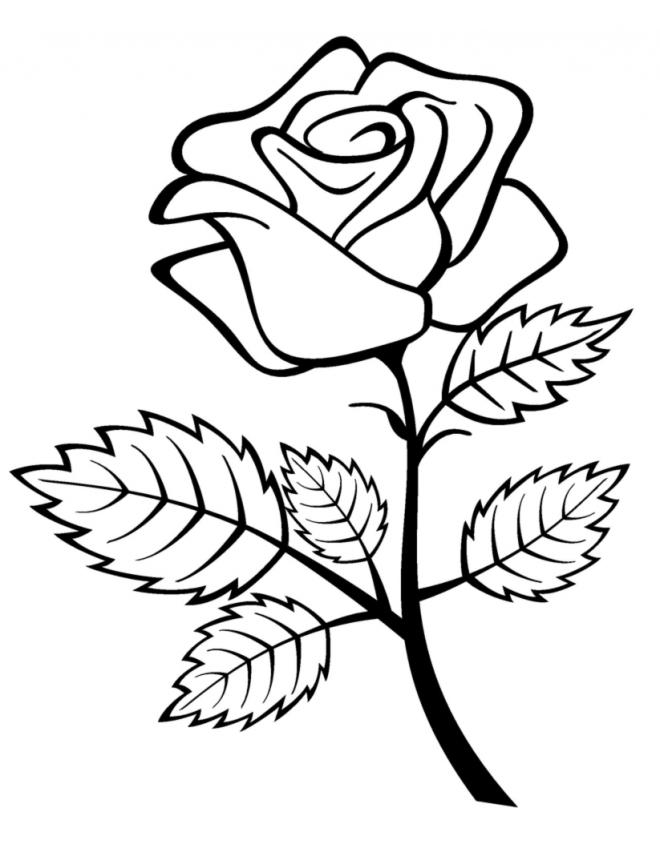 Immagini di fiori da colorare gratis disneyreport for Fiori facili da disegnare
